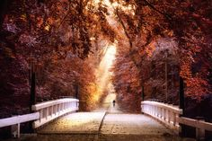 "taking the bridge of light - Amsterdam forest <a href=""http://larsvandegoor.com/"">WEBSITE</a> <a href=""https://instagram.com/larsvandegoor/"">Follow me on Instagram</a>"