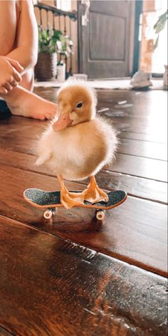 my duck is cooler than yours😎 Baby Animals Super Cute, Cute Little Animals, Cute Funny Animals, Funny Dogs, Funny Animal Jokes, Funny Dog Memes, Funny Animal Videos, Animal Memes, Baby Animals Pictures