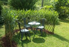 Garden Fencing, Herb Garden, Home And Garden, Living Willow, Pergola, Living Fence, Farm Stay, Green Rooms, Outdoor Furniture Sets