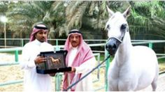 Gila! Kuda senilai 12 Juta Dolar Milik Alwaleed bin Talal di Eksekusi Mati Karena Dianggap Gay