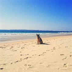 Surferdog, beach, Peniche, Portugal Beach, Water, Sports, Fun, Outdoor, Water Water, Hs Sports, Fin Fun, Aqua