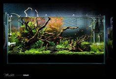 See more in the All Things Aquaria board: https://www.pinterest.com/JibinAbraham/all-things-aquaria/  Drift Away