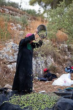 Sorting Olives in Jerusalem • Synne Tonidas