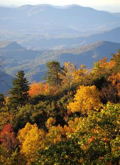 Get Asheville fall foliage forecast and timeline 2020 with plenty of updates, scenic drives, festivals, places to see in the Blue Ridge and Great Smoky Mountains of North Carolina. Nc Mountains, North Carolina Mountains, Blue Ridge Mountains, Autumn Scenery, Autumn Trees, Landscape Photos, Landscape Paintings, Landscapes, Fall Pictures