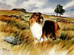 I've always loved collies.