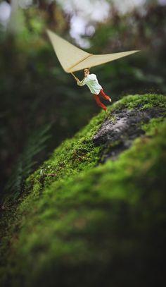 Photo : Fiddle Oak