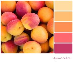Orange Apricot Color Palette bright kitchen