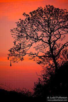 ✯ Caribbean Sunset