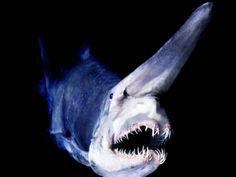 Deep Seas 10 Most Amazing Creatures, via YouTube.