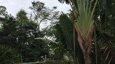 Pássaros Pretos: Sinfonia. Tiguera 360. Juiz de Fora, MG, Brasil. IMG_53...