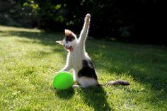 20+ Poze amuzante cu pisici naravase   6 din 24