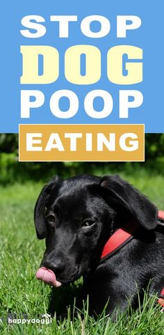 Why Do Dogs Eat Poop? Stop Your Dog's Poop Eating Habit. The act of eating poop is a common behavior among dogs. Most cases appear to be behavioral, but there are numerous medical problems that could be the cause for this behavior.