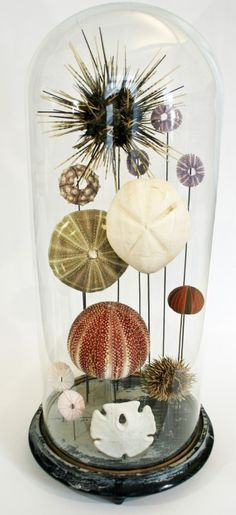 would be really cool to make something like this with things from Newport or surrounding beaches to take with me for my desk in TX
