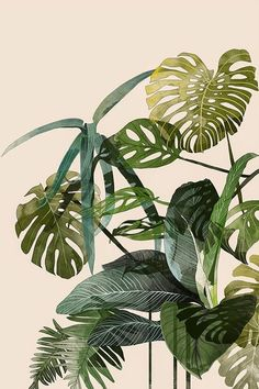 Painterly & Linear Tropical Leaves