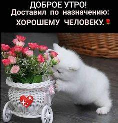 Birthday Greeting Message, Birthday Greetings, Good Morning Photos, Good Morning Messages, Good Morning Happy Friday, Morning Greeting, Positive Quotes, Photo Wall, Cards