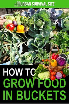 Growing your own groceries in five-gallon buckets allows you to raise enough food to feed a family of four in a tiny space. Growing Food, Plants, Dwarf Fruit Trees, Growing, Growing Herbs, Growing Groceries, Fruit Plants, Passion Fruit Plant, Bucket Gardening