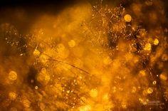 Goldy - Bokeh Photography by Joni Niemelä  <3 <3