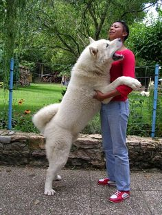 """Click visit site and Check out Best """"Akita Dog"""" T-Shirts & Hoodies. This website is excellent. Tip: You can type """"your first name"""" or """"your favorite shirts"""" by using search bar on the header. #akita"""