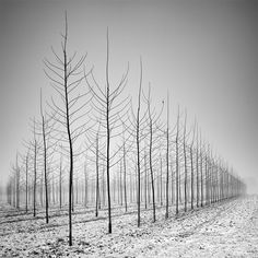 Long Exposure Tree Landscapes by Pierre Pellegrini. Each one is almost more mind-blowing than the last, see several more on Colossal:    http://www.thisiscolossal.com/2013/03/long-exposure-tree-landscapes-by-pierre-pellegrini/