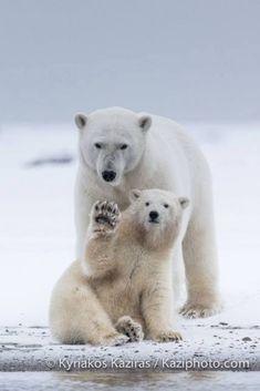 Kyriakos-Kaziras-Photographer-vous-souhaite-une-bonne-journée-avec-cette-photo-magnifique-prise-en-Alaska...jpg (683×1024)