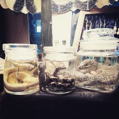 New reptiles wet specimens Pinned and into submission.  (at American Ritual Tattoo & Wunderkammer Curiosity Shoppe)
