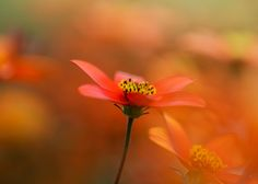 Tender Red by Andrei Stepanov - Photo 129299657 - 500px