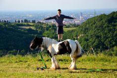 Irish cob stallion # Danny Boy irish cob # farm house # B&B Cà Bianca dell'Abbadessa # Bologna - Italy # allevamento irish cob #