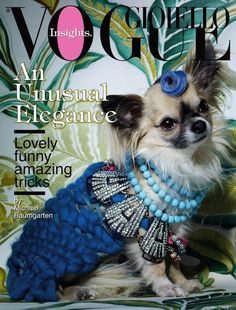 """an unusual elegance"" ...chihuahuas in jewels and wigs by michael baumgarten for vogue gioiello    ...obviously this is my thing"