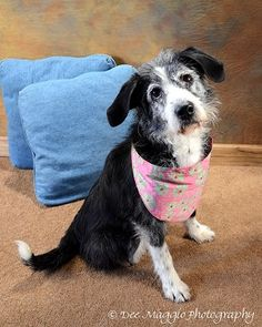 This sweet girl is looking to find her forever home. Could it be yours? She is just as cute as a button, isn't she?