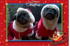 """""""Frankie and Lola are watching for Santa Paws"""" by Audrey."""