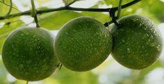 Pensieri & Parole: Il frutto Monk