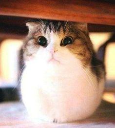 Little ball of fur