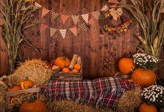 Halloween Fotos, Photo Halloween, Theme Halloween, Happy Halloween, Halloween Garden Ideas, Halloween Mini Session, Photographie D' Halloween, Halloween Fotografie, Fall Festival Party