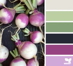 color root | design seeds