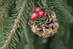 Pinecone birdseed balls attract birds to your yard.