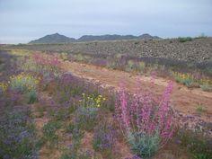 Sonoqui Wash Equestrian Trail #QueenCreek #Arizona #Spring