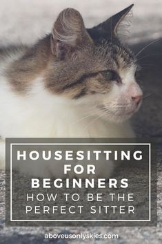 What to look out for on your first housesitting assignment and how you can start to build a reputation as a skilled and reliable sitter...