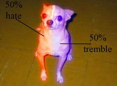 The anatomy of a chihuahua - Meme Guy these are the little things that chase a big bus not that they would know what to do with it if they caught it.. they have a form of insanity