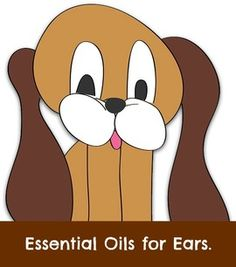Using essential oils when you notice your dog has an ear infection, after getting more serious problems ruled out by your vet.