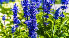 Types of Blue Flowers with Pictures Best Perennials, Hardy Perennials, Flowers Perennials, July Birth Flower, Birth Month Flowers, Types Of Blue Flowers, Purple Flowers, July Flowers, Larkspur Flower