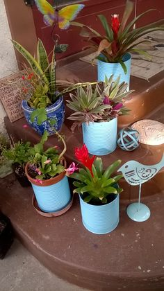 A bit of fun color spray paint and  a few large empty coffee cans, I can add a pop of instant color to my patio garden