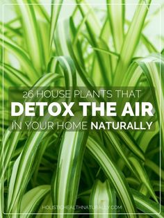 26 House Plants That Detox The Air In Your Home Naturally. NASA researchers suggest efficient air cleaning is accomplished with at least one plant per 100 square feet of home or office space.