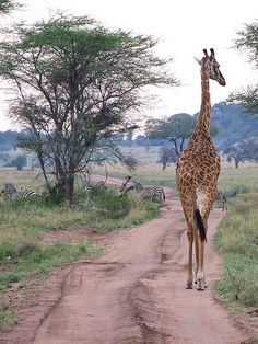 AFRICA....on safari
