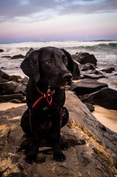 Original caption: Ok, take me home now please, i'm cold and wet. (Puppy's first day at the beach)
