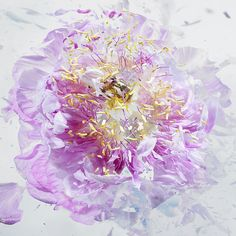 High Speed Flower Explosions by Martin Klimas high speed flowers