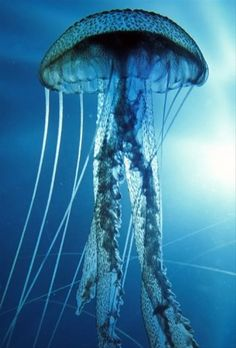 One of the most lethal creatures found in the world is the box jellyfish.