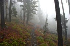 rainy mountain scene | under baldy mountain roadless area hiking tags baldy mountain roadless ...