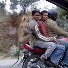 """L""""homme descend du singe et le singe ne descend pas de la moto..."""