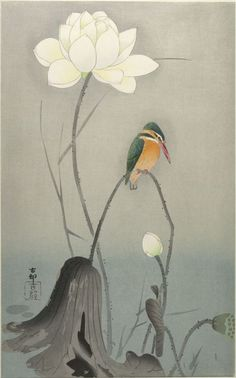 'Kingfisher on Lotus' Woodblock print by Ohara Koson 小原古邨 - Image and text courtesy Freer Sackler. Japanese Art Copyright with museum. Japanese Painting, Chinese Painting, Chinese Art, Ohara Koson, Art Chinois, Harvard Art Museum, Art Japonais, Arte Floral, Japanese Prints
