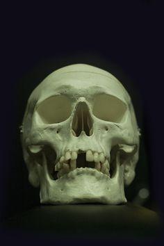 Skull ref
